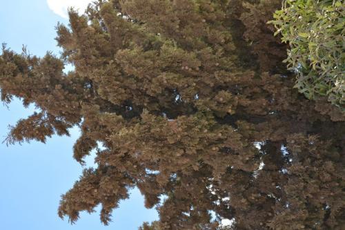 Sep 9 Mount Nebo  (33)