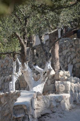 Sept 14 Friday Dominus Flevit Mount Of Olives Jesus Wept (48)