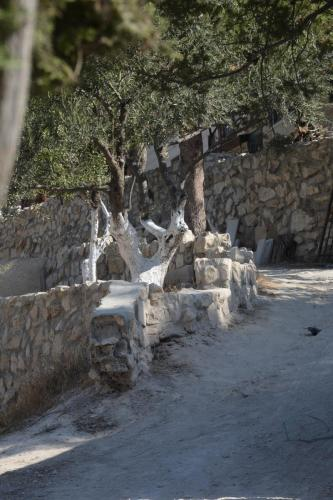 Sept 14 Friday Dominus Flevit Mount Of Olives Jesus Wept (49)